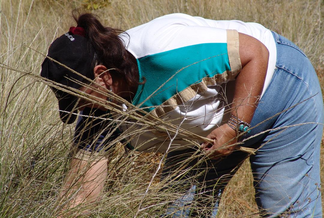 diania caudell harvests deergrass