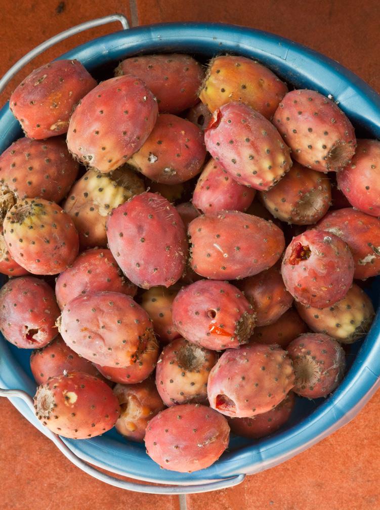 prickly_pear_tunas