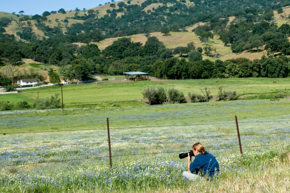 Deborah Small photographing California wildflower fields