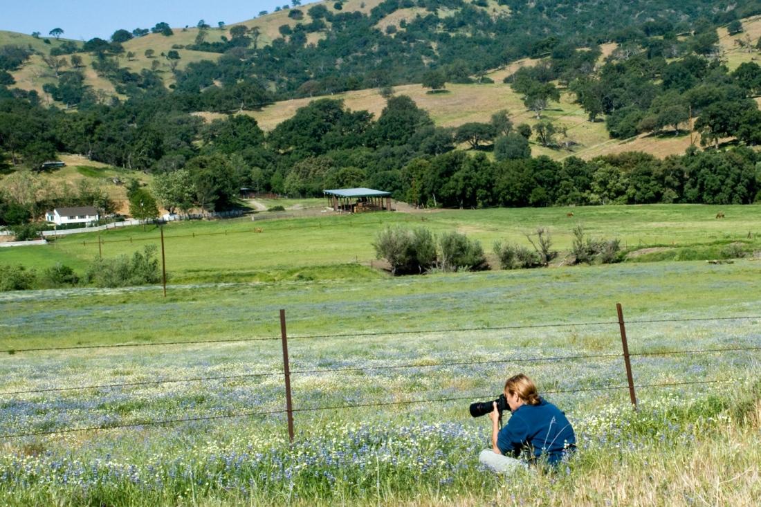 Deborah Small photographing California wildflower fields