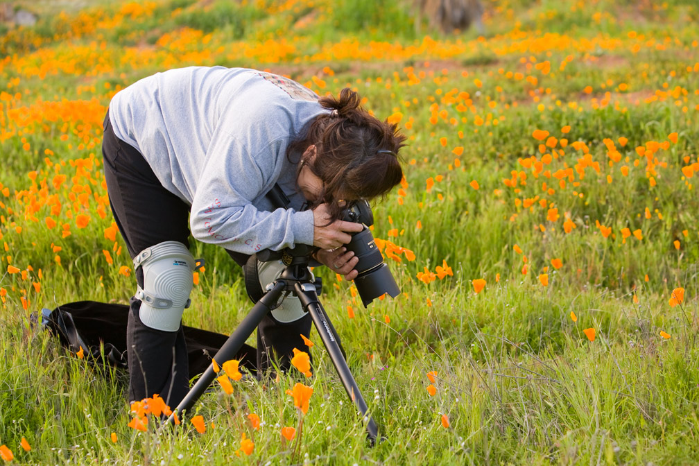 Collaborator Rose Ramirez photographing California poppy fields