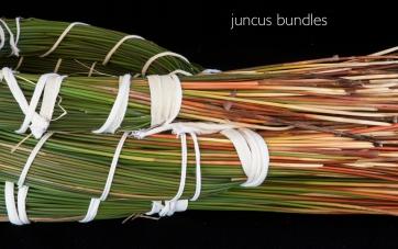 Juncus textilis bundle