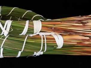 Juncus textilis bundles