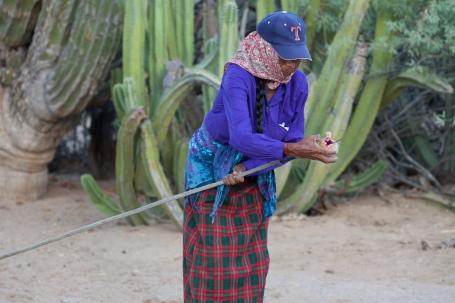 cardón cactus, Pachycereus phinglei, largest cactus in the Sonoran Desert