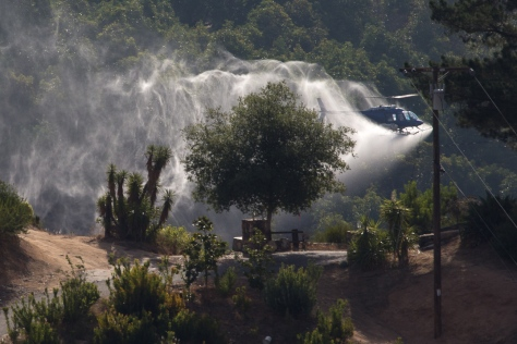 Abamectin spray_D3A1822