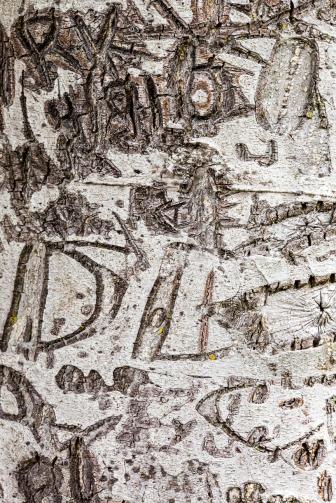 alder tree graffiti