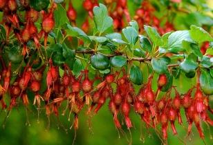gooseberry_new_calendar_8359