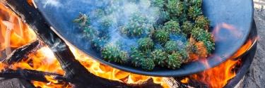 roasting-pinyon-pine-cones-0262