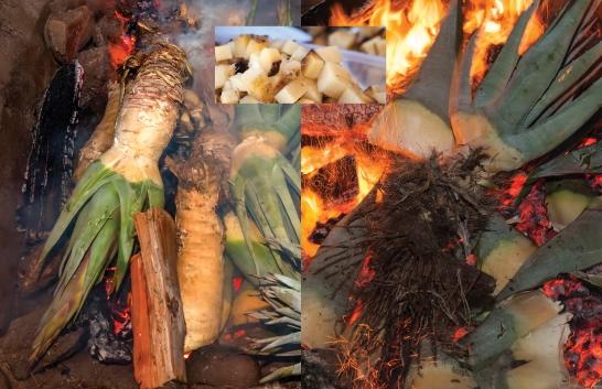 Agave roasting
